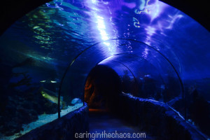 caring in the chaos.com chessington review 8